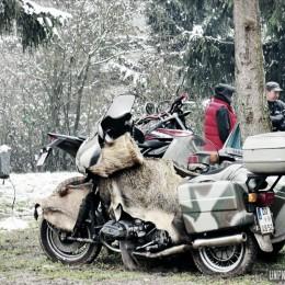 Les Eléphants 2016 : on est allé se les geler au Nürburgring !